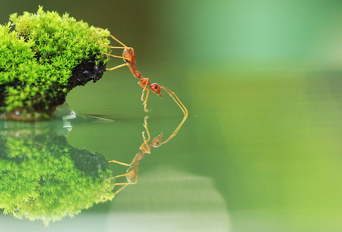 Red Ant | by Charlie Stinchcomb