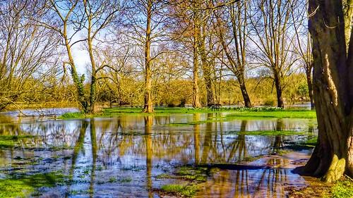 landscape trees water reflection flood
