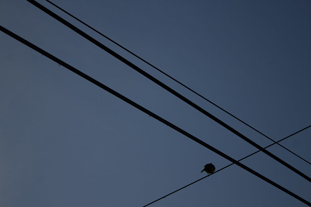 Hora azul 1