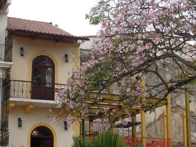 Yellow trim, pink flowers