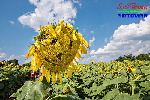 blue camillus clouds flowers maze newyork restaurant sky summer sunflower theinnbetween outdoors nikon d750 sb700 fillflash 1635mmf4vr smiley face