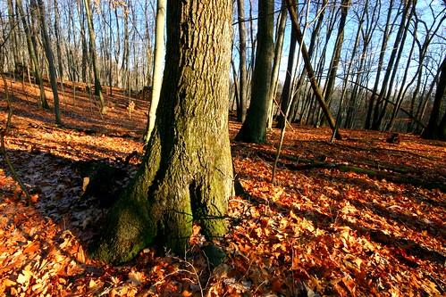 park winter usa leaves mi forest happy midwest michigan central sunny simplicity cleansing okemos nofluff secondarygrowth vanatta meridiantownship tedblackwoods