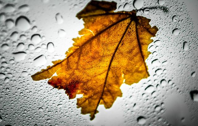 Rainy Day Windshield