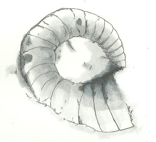 cephalopod. | by lshoemaker47274