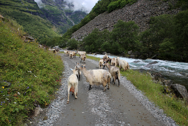The Flam Valley near Kardal