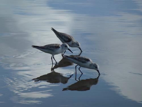 Parque Nacional Marino Ballena - vogels aan zee