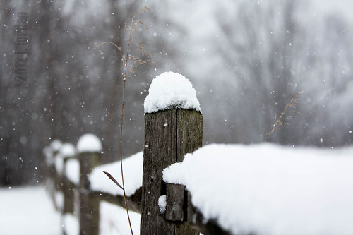 snowy posts | by Kittroid
