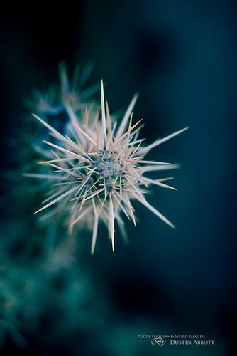 blue vacation arizona cactus usa macro green beautiful unitedstates desert bokeh naturallight handheld scottsdale fullframe selectivefocus narrowdepthoffield familytime closeupview extensiontubes canonef135mmf2l dimensionality canoneos5dmkii thousandwordimages adobelightroom4 dustinabbott dustinabbottnet