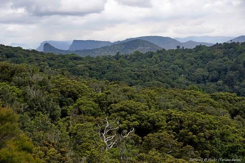 Rainforest of Main Range National Park, Australia   by Tatters ✾