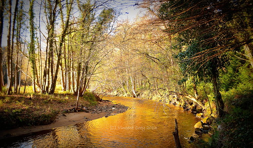 county autumn trees ireland leaves river photography gold for nikon estate powerscourt recreation riverbank wicklow enniskerry riverwalk dargle d5100 mygearandme mygearandmepremium mygearandmebronze mygearandmesilver mygearandmegold mygearandmeplatinum mygearandmediamond blinkagain flickrstruereflection3 rememberthatmomentlevel4 rememberthatmomentlevel1 rememberthatmomentlevel2 rememberthatmomentlevel3 me2youphotographylevel1 photograhyforrecreation