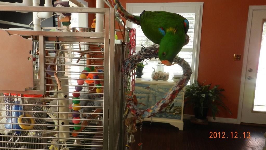 Parrots12Dec006