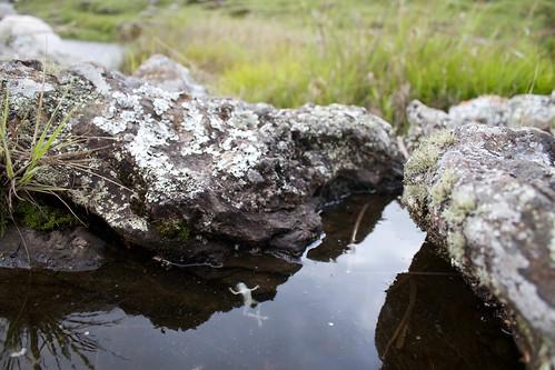 Dead frog, Chimanimani   by brian.gratwicke