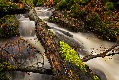 winter tree water creek river moss stream sweden stones explore halland mygearandme mygearandmepremium rememberthatmomentlevel1