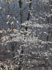 日, 2013-01-13 13:07 - Witch Spring Trail