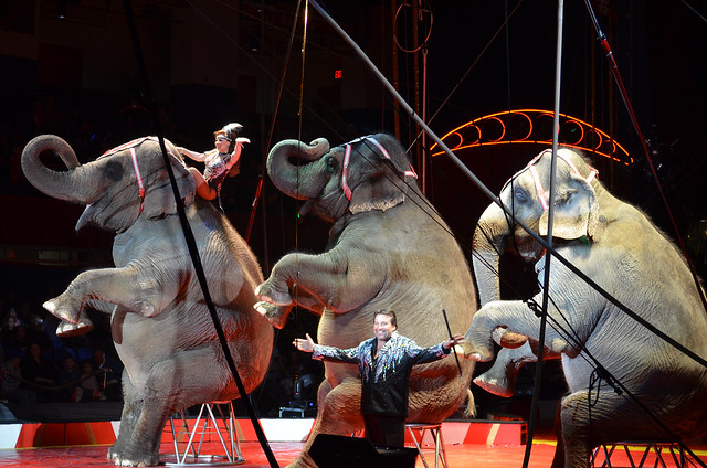 Elephants 005 - Royal Hanneford Circus - Westchester NY - 2013-02-16