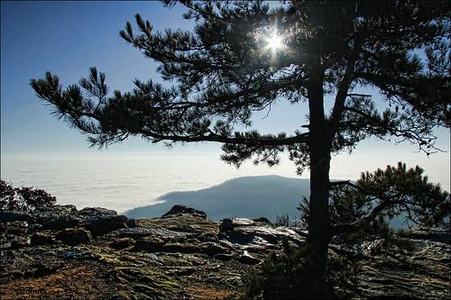 fog dawn arkansas russellville mtnebo arkansasriver zormsk sunrisepoint
