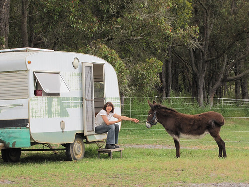 Donkey and the Caravan - Redmond Western Australia