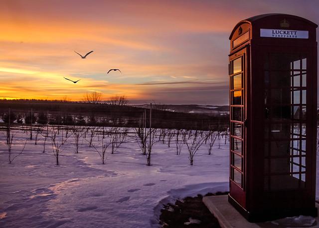 Long distance calling from Pete Luckett's Vineyard, NS