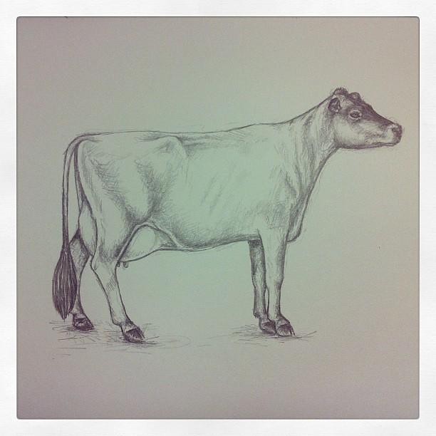 It's a jersey cow  #cow #sketch #art #artist #draw #doodle