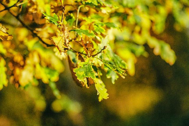 Leaves 2-00014