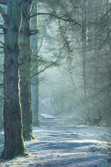 Frosty Woodland Walk