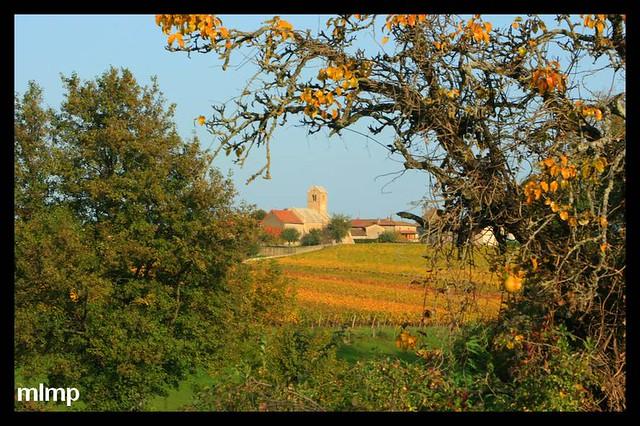 La chapelle de Domange dans son paysage viticole.