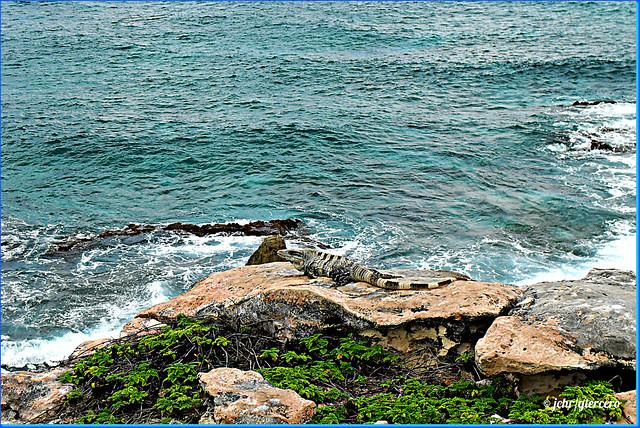 Caribe mexicano, Isla Mujeres....SDC13121E