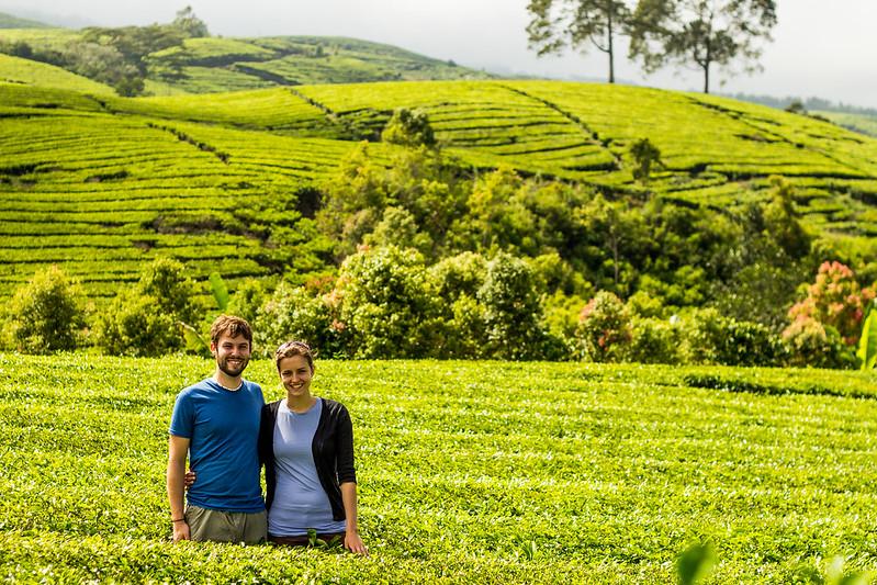 Kayu Aro Tea Fields