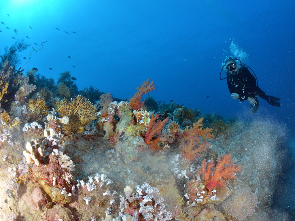 Me and corals on underside of Dunraven wreck, Ras Mohammed Park