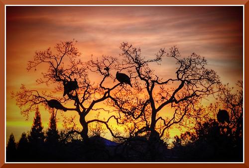 morning wild project turkey day folsom 1000 746