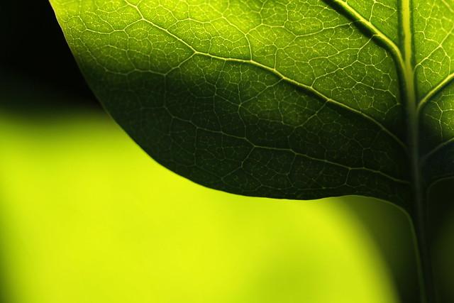 Macro: partly shadowed leaf