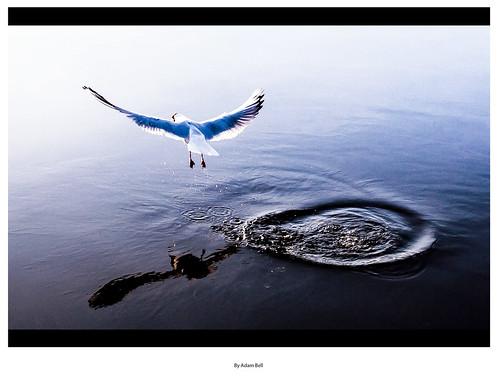 Flight   by ADAM J BELL   PHOTOGRAPHY