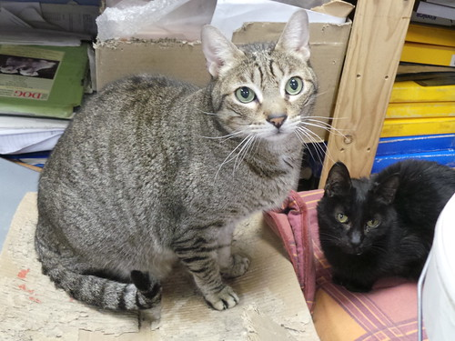 Spanish clinic cats   by Rayya The Vet