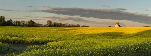 sunrise clara kilkenny ireland panoramic rapeseed yellow colour