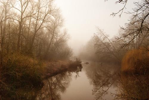 Misty Tern downstream | by Mike in SY5