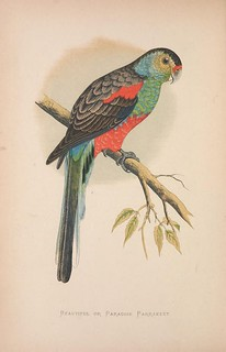 n65_w1150   by BioDivLibrary