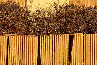 wear and tear - fence with hedge at sunrise | by Georgie Sharp