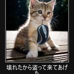 壊れたから盗って来てあげた ほんの恩がえしにゃ--気にするにゃ #猫 #子猫 #ねずみ