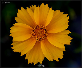 Yellow | by kth_friend