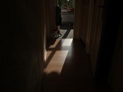 hallway + cat