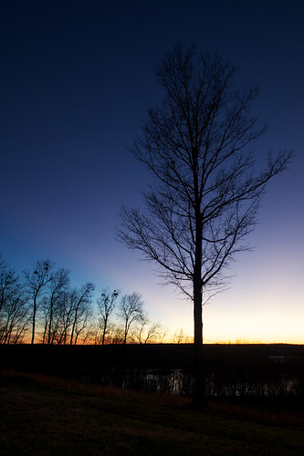 trees sunset tree landscape tennessee sony a55