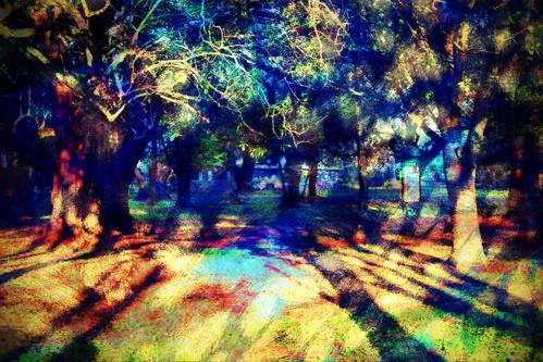 trees photomanipulation sunrise shadows digitalart hypothetical vividimagination wardpark artdigital arteffects shockofthenew sharingart awardtree vanagram crazygeniuses exoticimage netartii