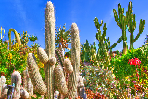 life park wild summer cactus sun white plant hot southwest flower color green nature floral beautiful cacti garden landscape botanical outdoors photo leaf succulent sand flora desert natural gardening outdoor decorative background barrel grow dry nobody sharp growth exotic needle photograph heat tropical spike canary spine botany ornamental thorn prickly yucca