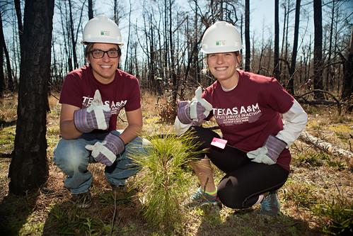 Aggies plant sapling - Replant Bastrop