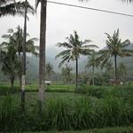 Les rizieres de Bali