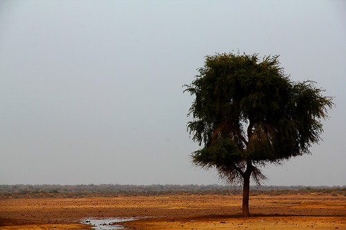 trees pakistan water rain landscape sand desert cholistandesert