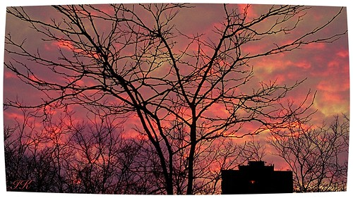 pink trees sunset nature clouds evening colours dusk silhouettes beautifulclouds pinkclouds earlysunset beautifulnature eveningclouds beautifultrees eveninghours beautifulsunsets sunsetcolours coloursofnature allsunsets wonderfulsunsets pinksunsetclouds beautifuleveningcolours