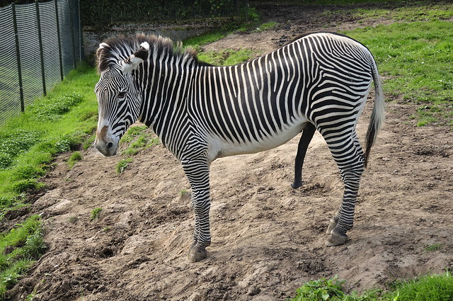 Chester Zoo (139)