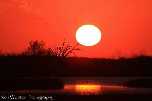 sunset galveston gulfofmexico nature gulf sunsets marsh galvestonisland saltmarsh silhouttes gulfcoast galvestonbay galvestontexas greatnature gulftnc09 gulfconservation galvestonswestend gulfofmexicoconservation dailynaturetnc12