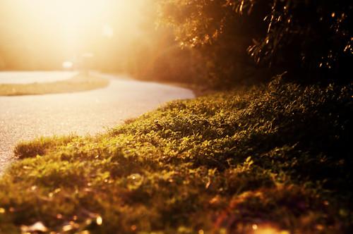 light sunset sun green grass yellow digital vintage golden bush nikon head quote path sunday memories hilton explore sidewalk teen hour lensflare raod dslr pathway goldenhour roa hss georgebernardshaw filmlook nikond90 exposure4